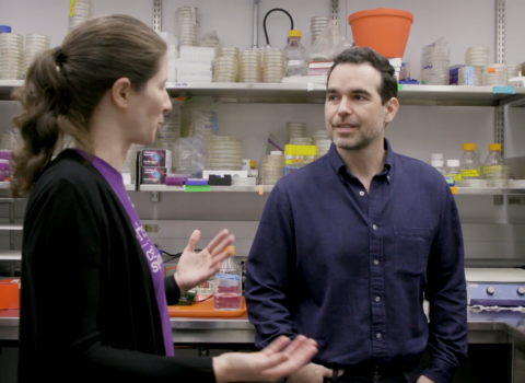 Dario Robleto and Danielle Tullman-Ercek talk in a laboratory