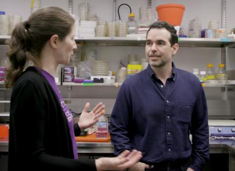 Dario Robleto and Danielle Tullman-Ercek talk in a laboratory